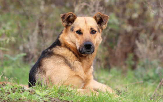 собака, друг Фон № 6345 разрешение 2560x1600