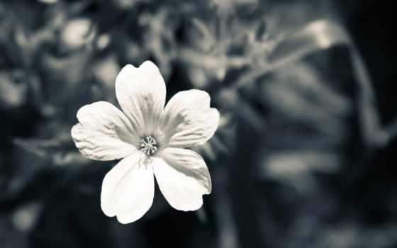 white, белые, чёрно, белое, цветы, бесшовные, мои,