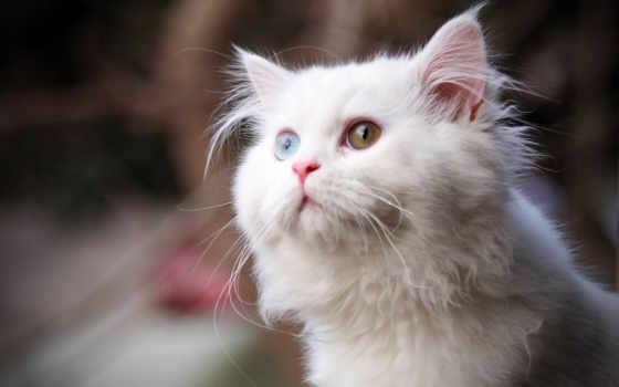 кот, white, кошки