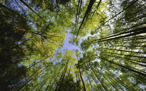 деревя, небо, ниже, взгляд,