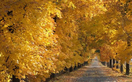 природа, года, time, природы, фотографий, осень, ночью, nebula, красная,