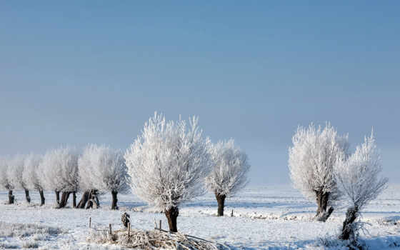 tapety, zima, kinderdijk, trees, pulpit, foto, ван, зимой, molen, uit,