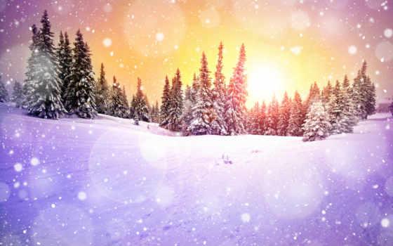 winter, снег, елки, зимние, заставки, чтоб, snowball, красивейшие, сугробы, eli,