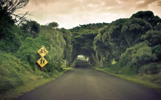 landscape, дорога, шикарный, trees, natural, пейзажи -, сквозь, природа,