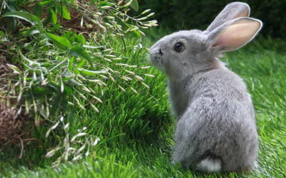 кролик, кролики, коллекция, качества, лучшая, загружено, уже, высокого, трава, страница,