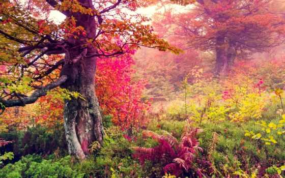 пейзажи -, высокого, разрешения, природа, красочные, лес, landscape, природы, лесу, качества,