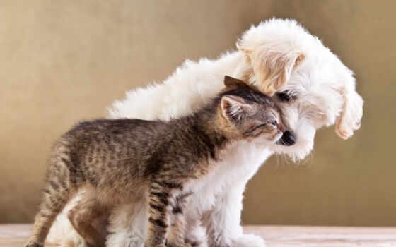 animal, funny, фото, фотообои, pavel, кот, день, caniche, aksenov, charming