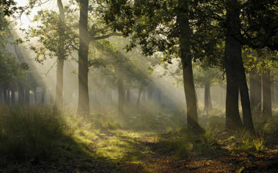 through, trees, sunbeams, forest, resolutions, resize, screen, crop, available, sun,
