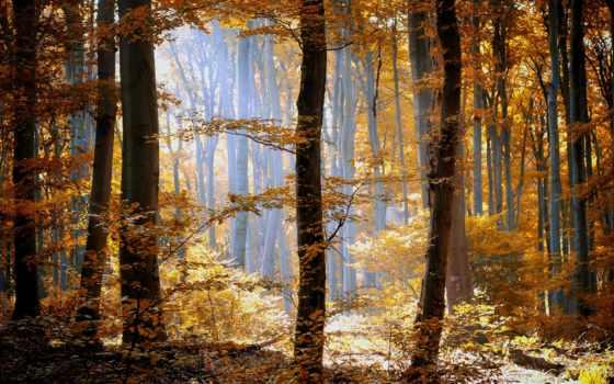 осень, красивые, фотографии