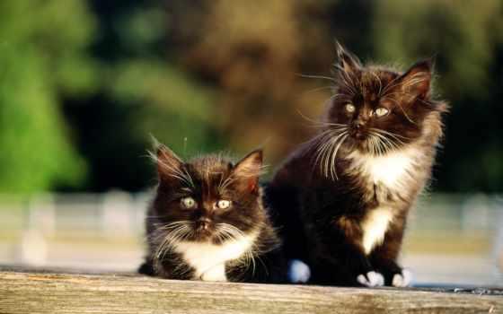 кошки, всех, два