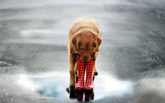 собака, улица