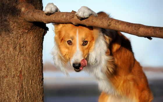 stock, animais, cão, fotos, imagens, parede, baixe, fundo, fotografia, planos, engraçado,