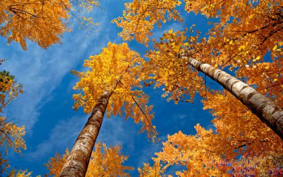 осень, золотая, заставки