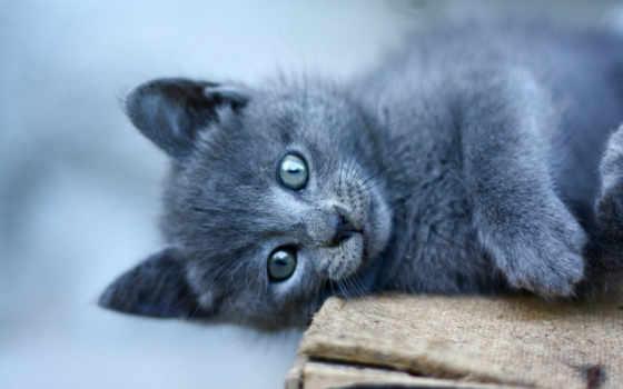 iphone, cats, animals