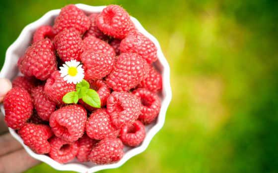 малина, summer, babe, малины, ягода,