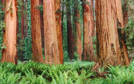 коллекция, лес, ocenka, wallpaperscraft, дерево, user, смотреть, тыс, иствуд, разработанный, wood