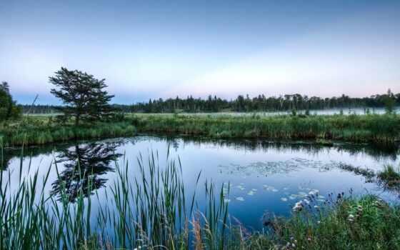 swamp, природа, красивый, море, art