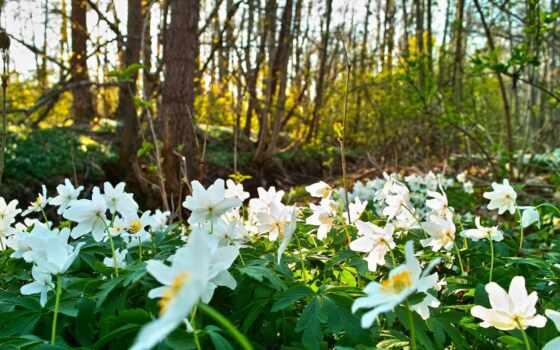 поляна, весна, цветами