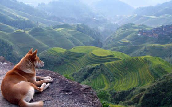 горы, собака, природа