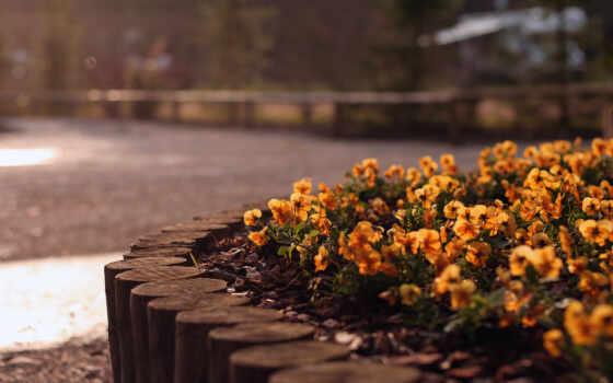 flowers, цветы, природа