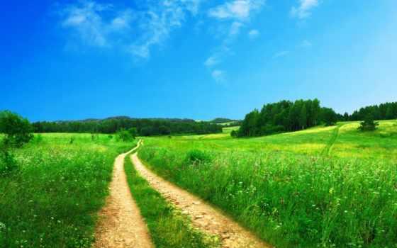 поле дорога лес