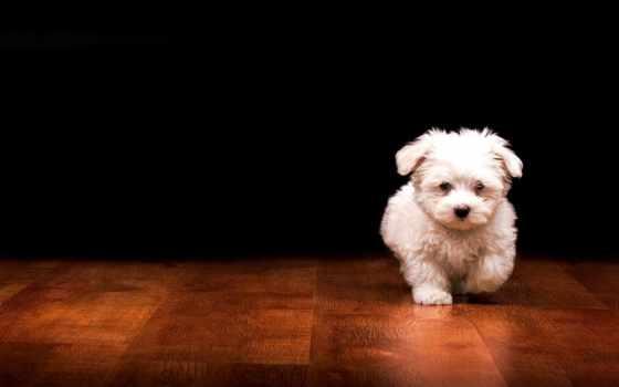 собаки, щенки, щенок Фон № 96332 разрешение 1920x1200