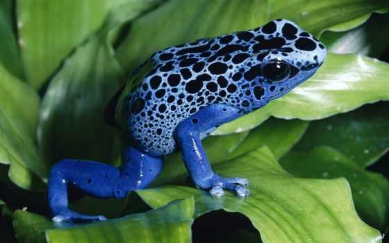 animals, лягушка, ago, месяцев, world, rainforest, об, лес, янв,