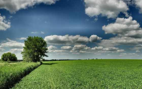 поле, дерево, высоком, зелёный, hdr, ветряк,