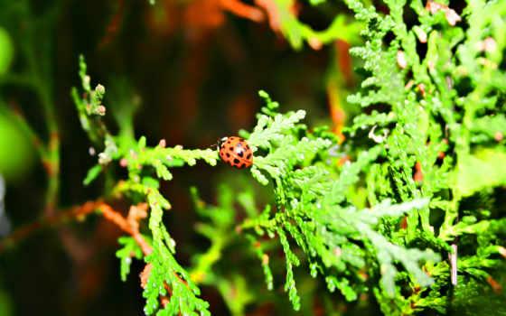 природа, июл, супер, часть, коллекция, великолепной, первозданной, нежной, взгляд, завораживающей,