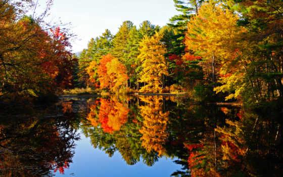 осень, manzara, телефон, resimleri, пейзажи -, заставки, пруд, лес, trees,