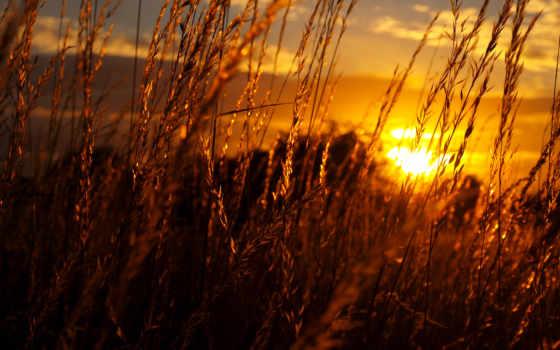 закат, sun, поле, трава, со, солнца, небо, колосья, закате, rays,