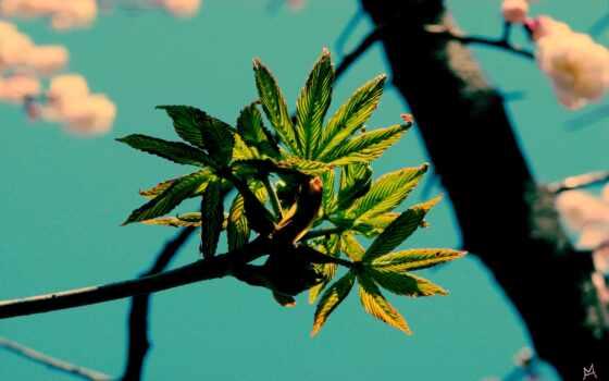 pine, твой, оригинал, добавить, комментарий