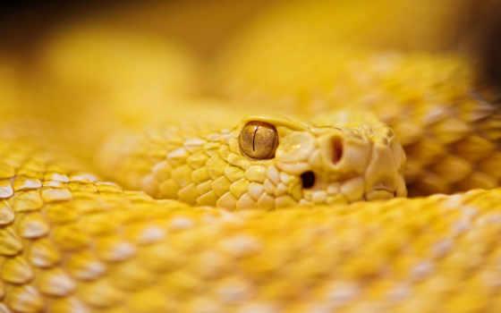 snake, dangerous, snakes