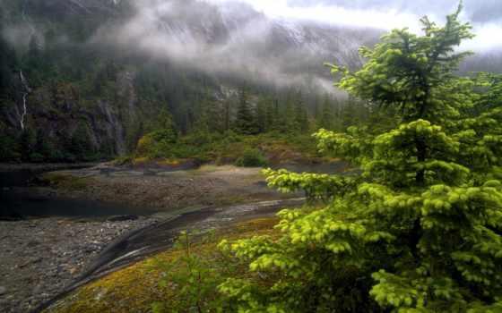 природа, совершенно, дерево, лес, река, туман, аляска, аляски,