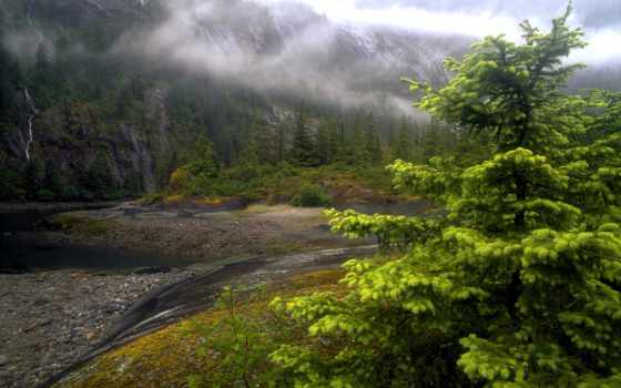 природа, аляски, аляска, река, туман, дерево, лес, свой, совершенно,