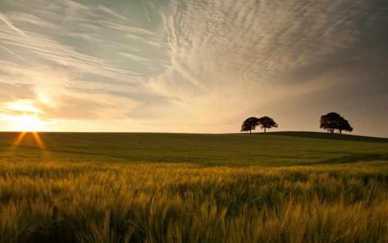трава, природа, макро, зелёный, trees, дерево, небо, луг, листва, красавица, изображения,