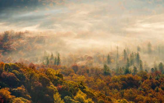 небо, осень, утро, лес, туман, iphone, oblaka, природа, trees, осенью, уж,