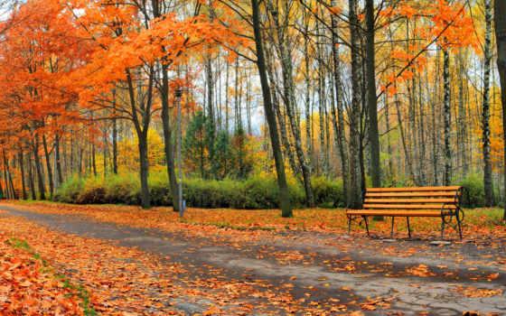 parque, fondos, pantalla, banco, otoño, rboles, carreteras, fotos,
