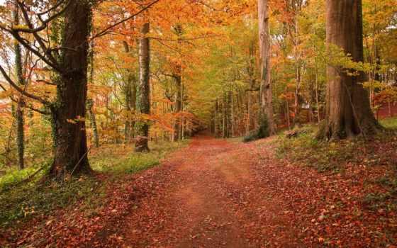 лес, осень, дорога, landscape, пейзажи -, forests,