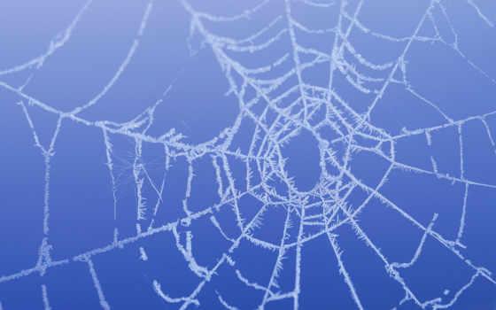 hacer, para, una, telaraña, araña, cómo, free, images, como,