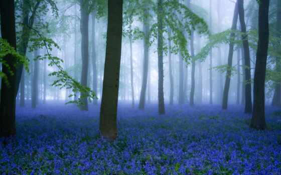 cover, landscape, fore, id, цветы, earth, природа, park, туман, natural, весна
