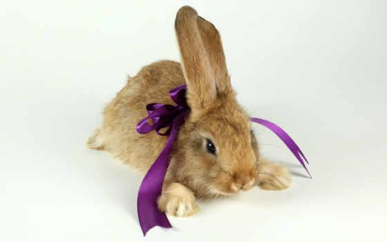 кролик, год