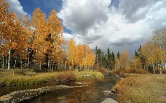 осень, природа, landscape