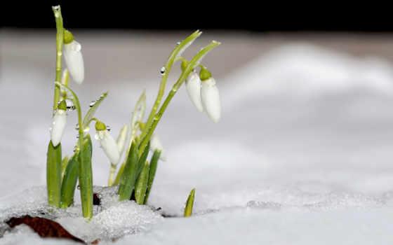 красивые, сайте, весна