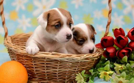 собачки в корзине