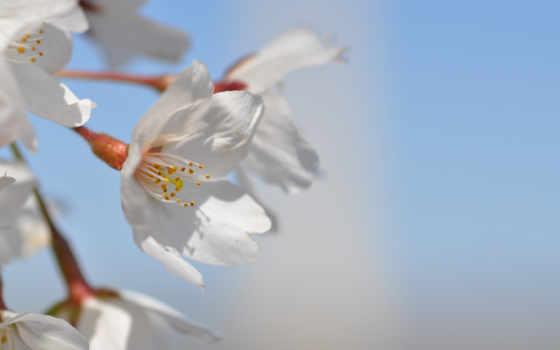 цветы, цветение