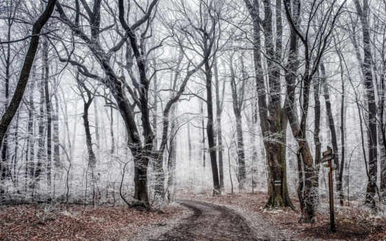 осень, дорога, деревя Фон № 108150 разрешение 2560x1600