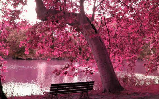 скамейка, весеннее, дерево, reki, путь, мария, лес, небо, озеро, цветущее,