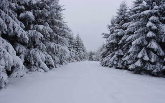 nevados, paisaje, pinos, landscape, снег, opt, радио, интернет, tapety,