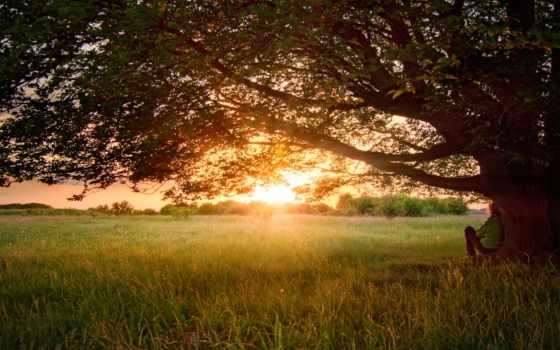 summer, природа, дерево, june, чувак, мабуть,